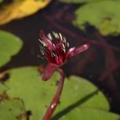 Brasénie de Schreber – Fleur